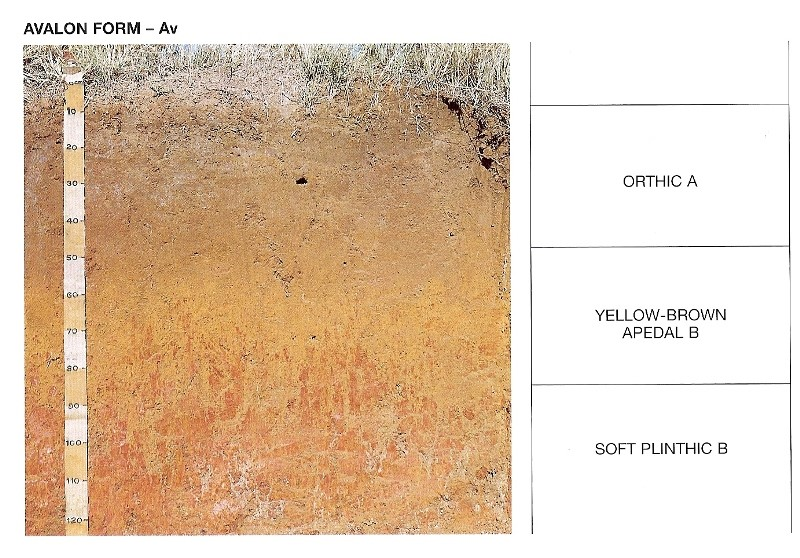 Photo 1: Avalon soil showing different horizons (Soil classification working group,   (1991)