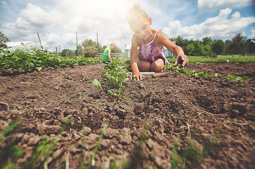 Sustainable Soil: Four Rules for Controlling Organic Inputs
